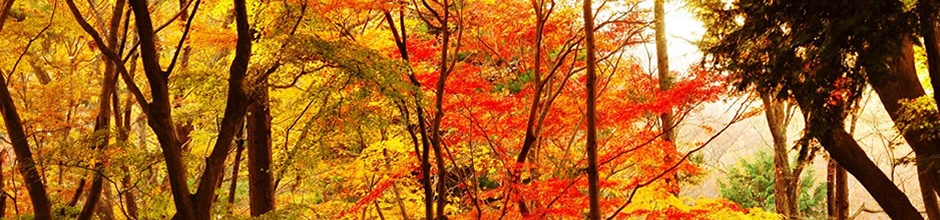 A photo of trees with red and orange leaves