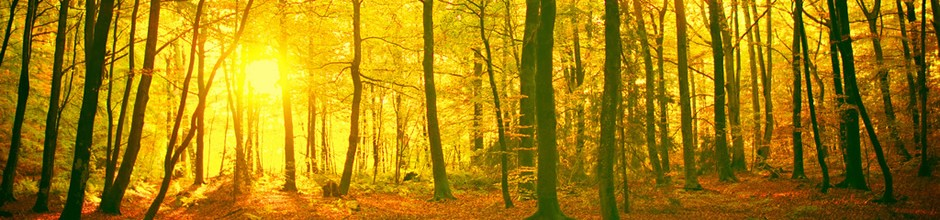A photo of some woodland with the sun streaming through